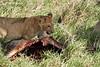 Yaya_Cubs_Playing_Lion_Marsh_Tangulia_Mara_Reserve_2018_Kenya_0055