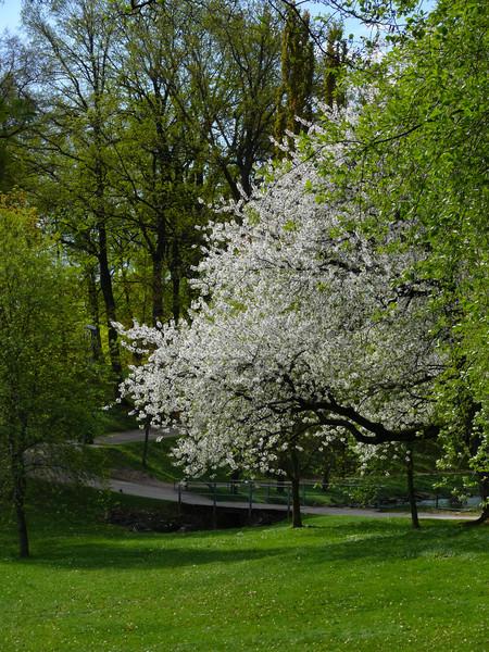Bilder från Boulongerparken i centrala Skövde