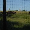 8:04am: retracing steps past Bison