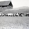 Hori's Ranch
