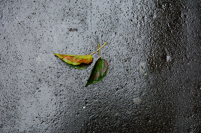 Leaves on Road , London