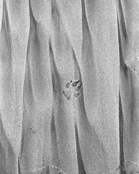 Paw print, Sand, oil spill