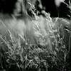 Grass in Wind