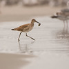 willet moss landing california