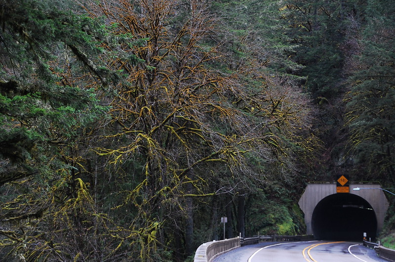 On Hwy 38 between Drain and the Pacific Ocean, this moss covered tree is the sentinel for the tunnel.  Or the tunnel is the sentinel for the tree.  I don't fucking know.  There's a sweet moss covered tree and a pretty badass tunnel.  There.