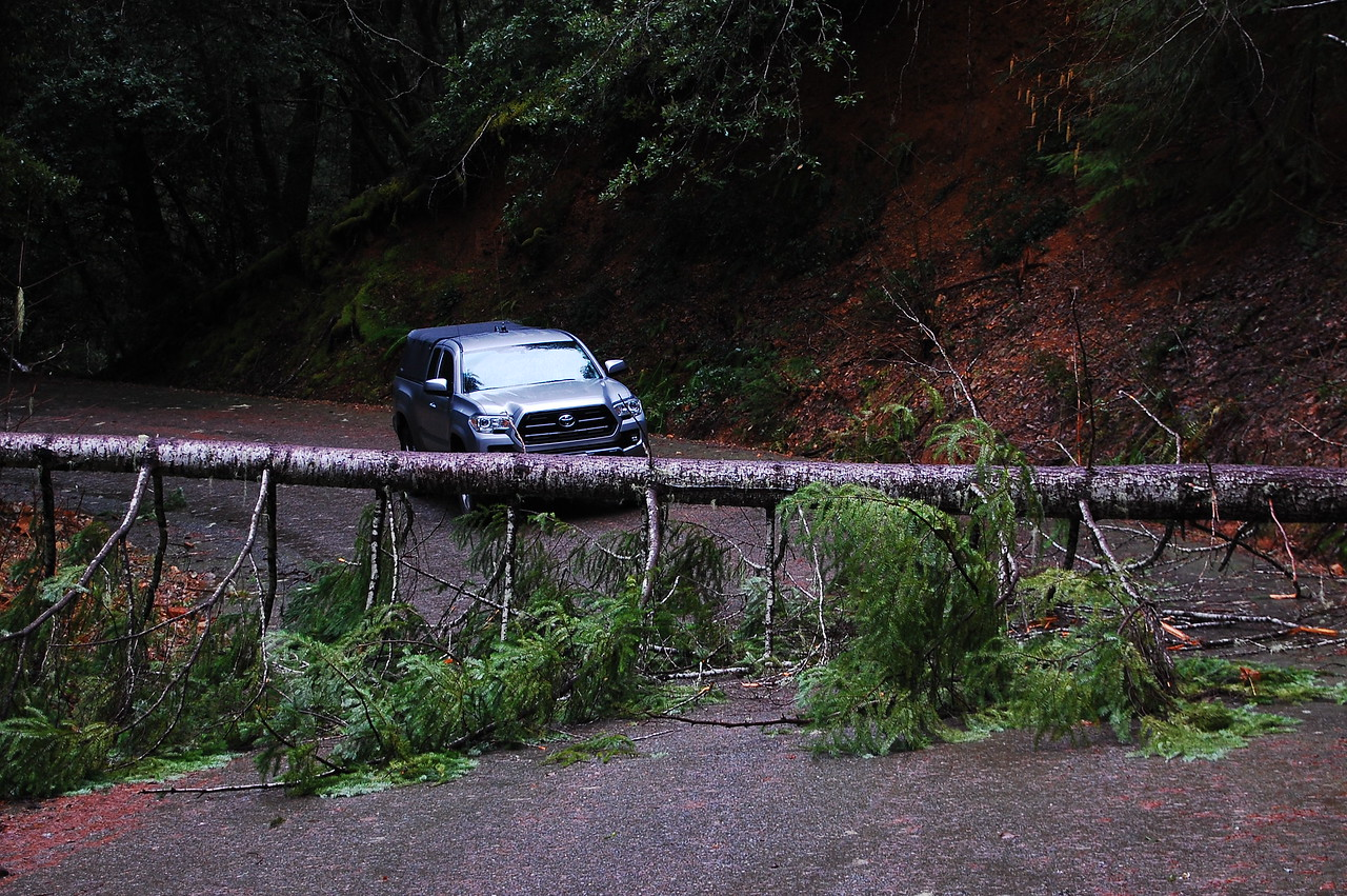 There has been a ton of rain lately which has caused a lot of landslides.  This tree down across Oregon Mountain Road (just off US 199 near the California / Oregon border) actually slid out of the earth and fell over, the entire root system was still attached.  The road was impassable.