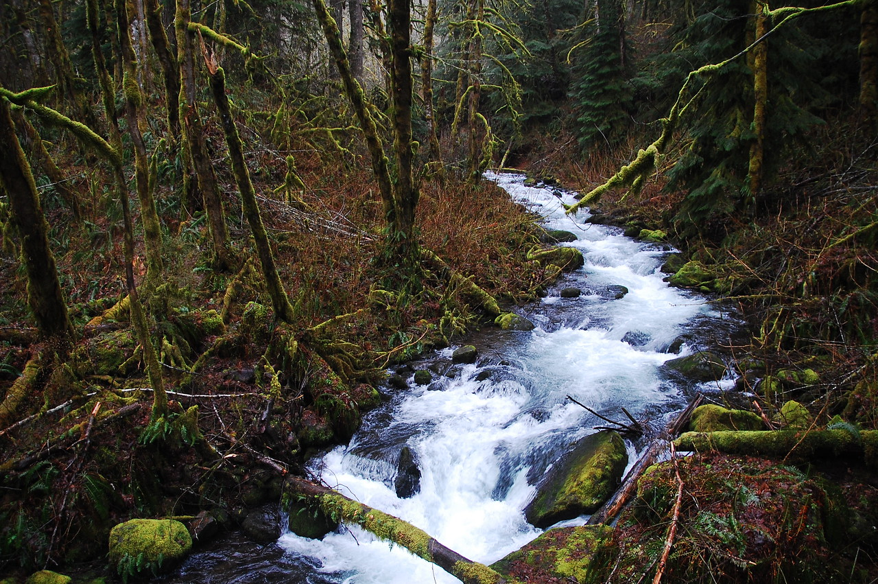 One of the hundreds of creeks flowing off the hills into the Columbia River.