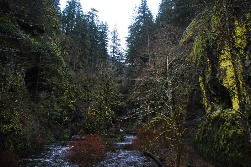 "View of a small gorge - what we would call a ""holler"" back home - with moss clinging to everything.  <br /> <br /> I love how the moss is so thick in the PNW.  It covers rocks, trees, everything.  It makes the whole area seem enchanted.  And green."