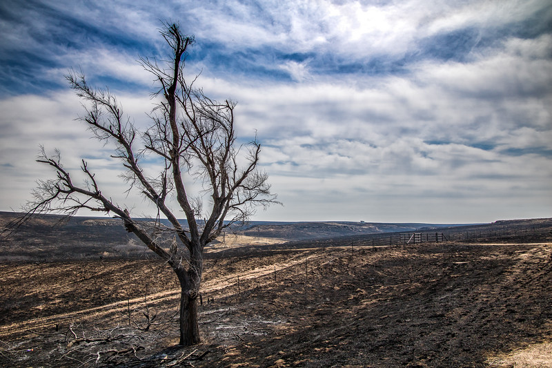 Wildfire Scarred Landscape, Lipscomb County