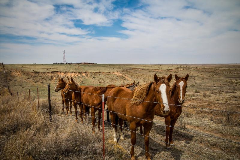 Lipscomb County Horses