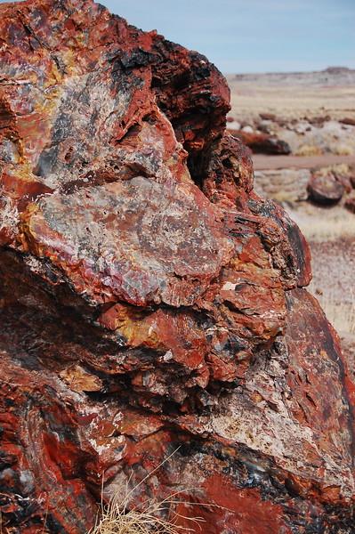 Petrified wood up close.