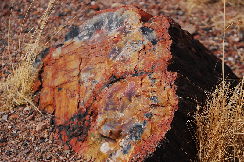 Look at the colors in that petrified wood.  Fucking awesome!