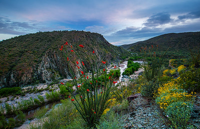 I-17 assignment  - Blooming Ocotillo and Brittlebush over Agua Fria River near Horseshoe Bar, Black Canyon Trail, near Black Canyon City, about 1/2 mile west of i-17