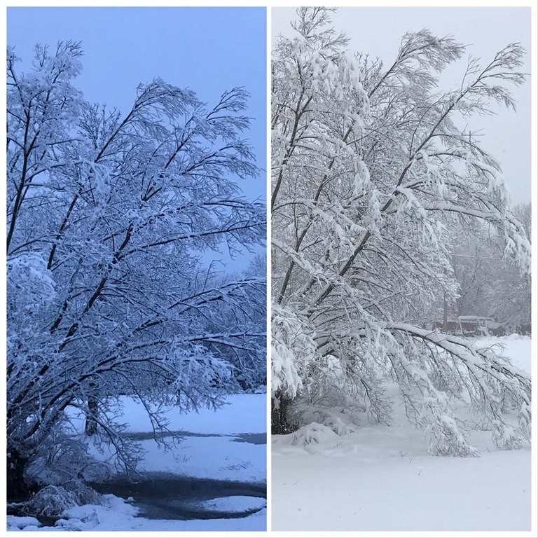 . This time-lapse photo by Jessica Marie May shows a tree in Oneida at 5:30 a.m. and again at 3 p.m. on Friday, March 2, 2018.