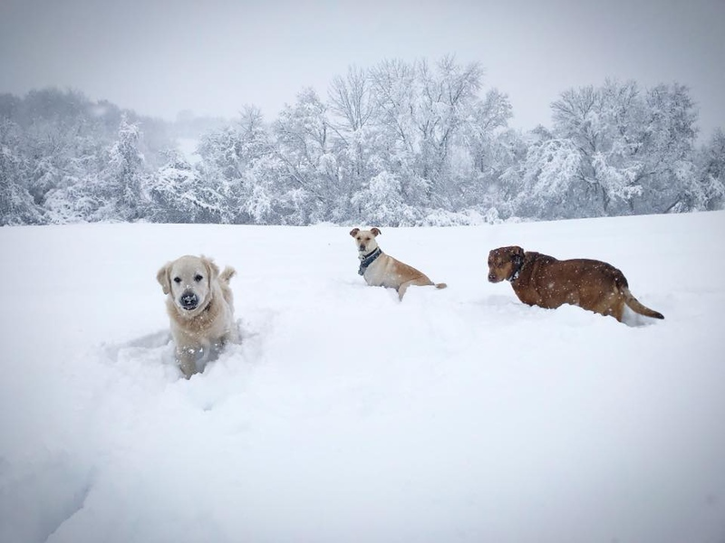 . Dogs frolick through the snow in Wampsville on Friday, March 2, 2018, in this photo by Danielle Cook.