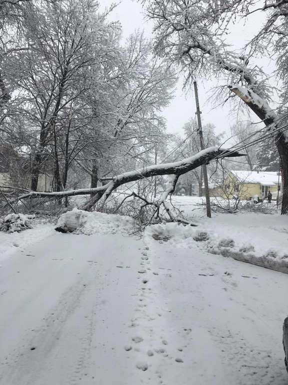 . This photo by Jennie Lynn Sequin-Fisher shows a downed tree on Tilden Street in Oneida on Friday, March 2, 2018.