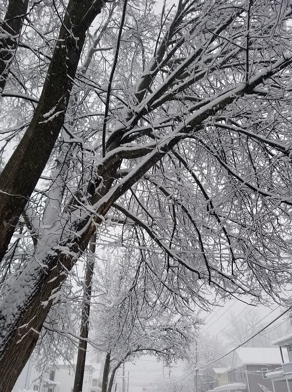 . This photo by Christine Barbano-Comeau shows snow-laden branches on Friday, March 2, 2018.