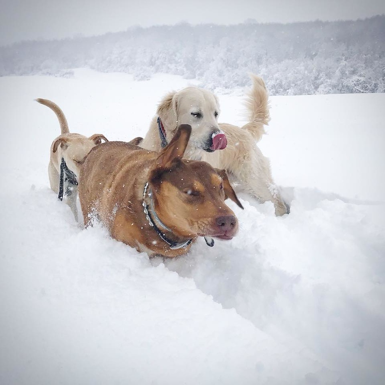 . Dogs play in the snow on Friday, March 2, 2018, in this photo submitted by Danielle Cook.