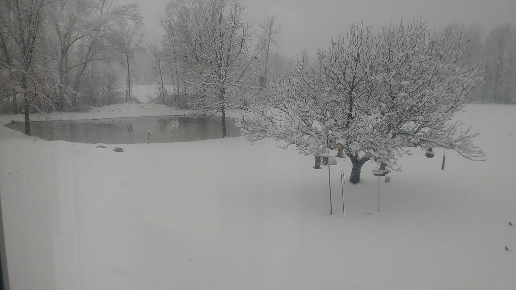 . This photo by Jennifer Tyler shows her yard in Canastota on Friday, March 2, 2018.