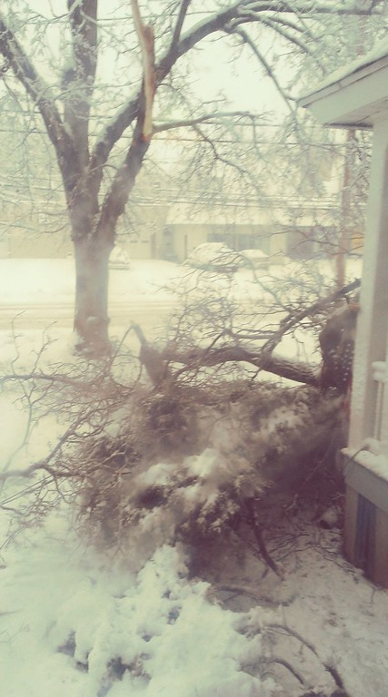 . This photo by Melissa Egnaczyk-Taylor shows a downed tree on Friday, March 2, 2018.