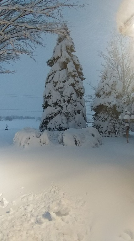 . This photo by Tammy Shlotzhauer shows her front yard in Clinton on Friday, March 2, 2018.