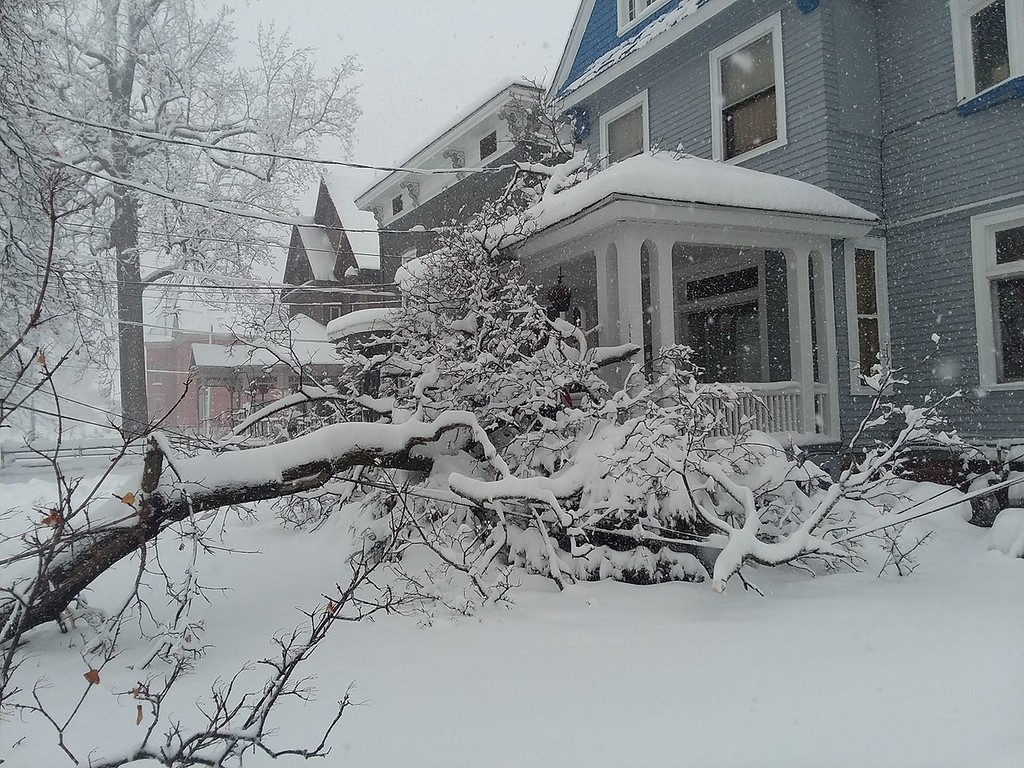 . This photo by Miguel Tomas shows a downed tree on Broad Street in Oneida on Friday, March 2, 2018.
