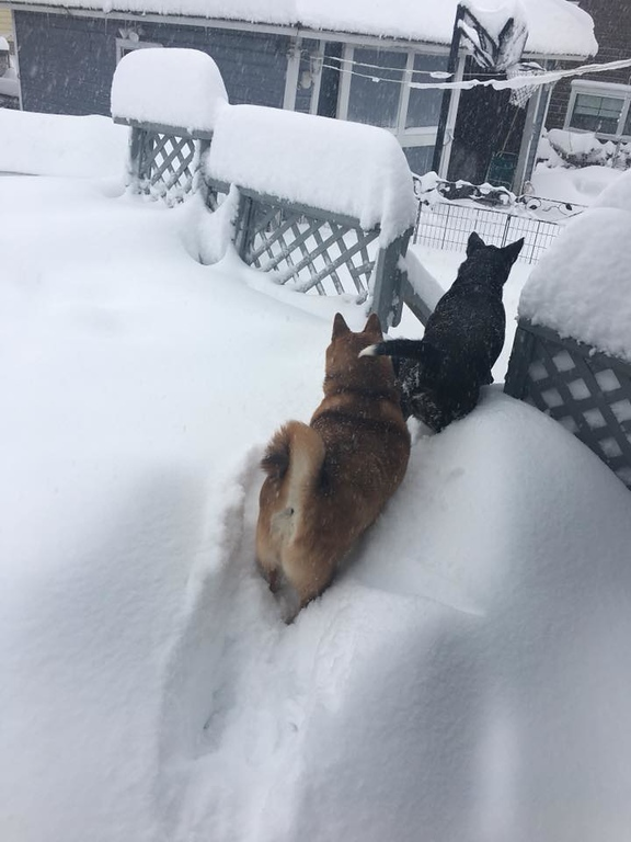 . Dogs scurry through the snow on Friday, March 2, 2018, in Oneida, in this photo by Robyn Whitcomb Barbano.
