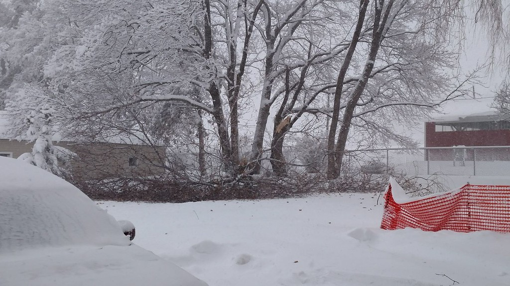 . This photo by Tracy Bennett Spencer shows a fallen tree branch in Deansboro on Friday, March 2, 2018.