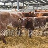 Beef Shorthorn lot 162 sold for 3600 gns