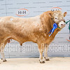 Blonde Reserve Champion lot 205