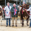 Beef Shorthorn Champion lot 107 Reserve lot 140