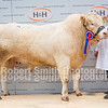 Blonde Champion lot 208 sold for joint top price 3000 gns