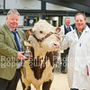 Hereford Champion lot 220 sold for 2600 gns