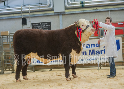 Hexham Mart Store Cattle and Pedigree Show and Sale - March 8th and 9th 2018