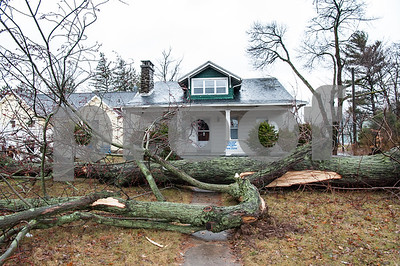 03/02/18  Wesley Bunnell | Staff  A large tree fell mid afternoon across the front yard of an empty house at the corner of Stratford and Stanley St. Heavy wind gusts and strong rain took down limbs and trees across the city on Friday.
