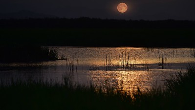 """Full Moon Flowing into the 'Long Swamp' """