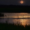 """""""Full Moon Flowing into the 'Long Swamp' """""""