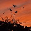 Three Cockatoos fending off potential intruders. 16:9 crop.