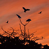 Three Cockatoos fending off potential intruders.