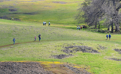 "Although wildflowers are blooming Thursday at the North Table Mountain Ecological Reserve in Oroville the ""suerbloom"" seen in Southern California has yet to appear in Northern California. (Matt Bates -- Enterprise-Record)"
