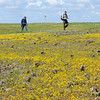 Wildflowers at the North Table Mountain Ecological Reserve in Oroville on Thursday. (Matt Bates -- Enterprise-Record)