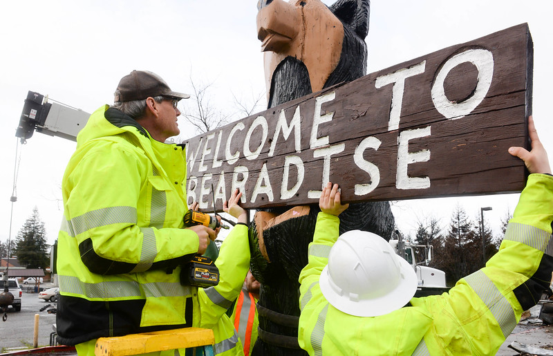 "Mike Houdek removes the ""Welcome To Bearadise"" sign from the Black Bear Diner bear sculpture before it is lifted by crane Thursday in Paradise. (Matt Bates -- Enterprise-Record)"