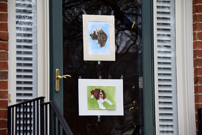 This neighbor posted portraits of some of the neighors' dogs - Jasper (top) and Nash (bottom).
