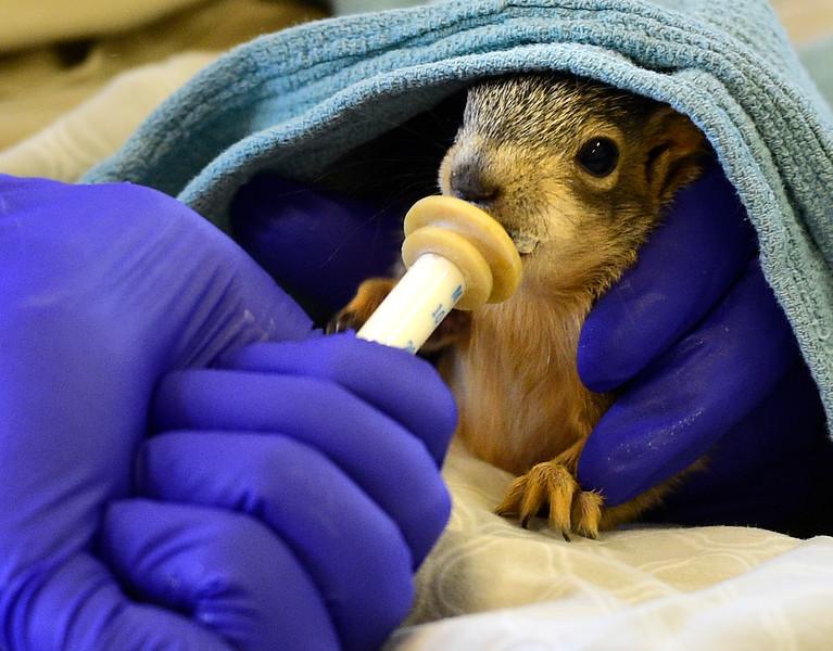 Greenwood Wildlife Rehabilitation Center