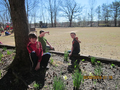 Cleaning sycamore balls from the flower bed at SES