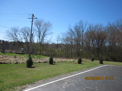 Newly planted pine trees at TCES