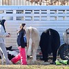 KEVIN HARVISON  <br /> Cattle are tied up ready to be worked on before the start of the 2020 Junior LIvestock Show at the PIttsburg County Fairgrounds.