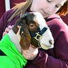 KEVIN HARVISON  <br /> Madison Brinlee, 6th grade 4-H student from Hartshorne,  spends some time with her goat before a showing in the Junior Livestock Show at Pittsburg County Fairgrounds.