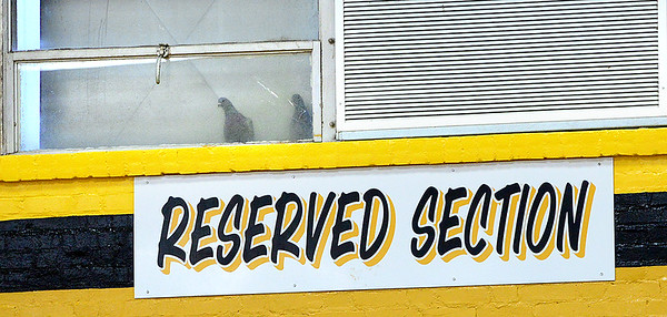 KEVIN HARVISON |<br /> Reserved seats are for the birds. A pair of pegeons watch the McAlester Buffaloes during a recent game at Bob Brumley.