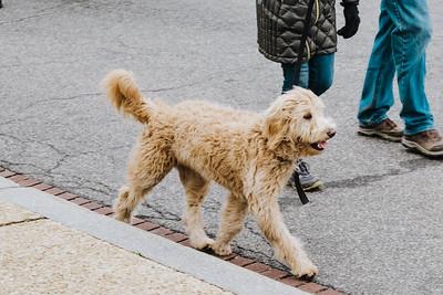 doggie (1 of 1)